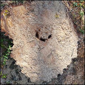 tree-service-image