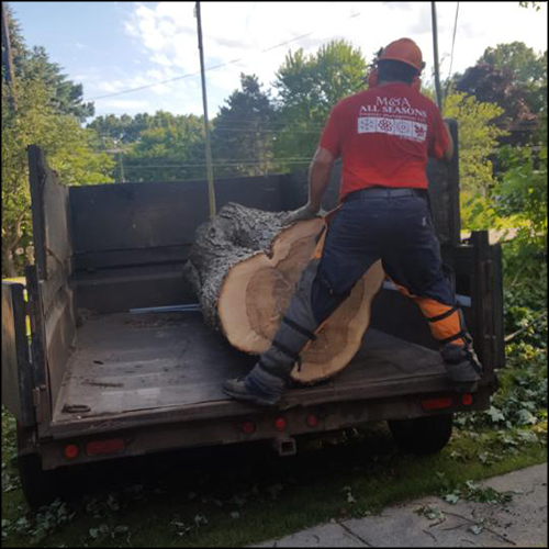 MAT-tree-removal-gallery-1