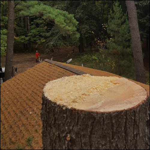 MAT-tree-removal-gallery-10