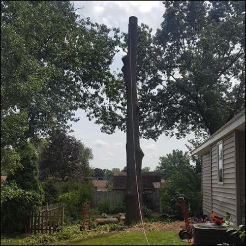 MAT-tree-removal-gallery-11