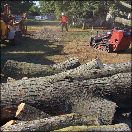MAT-tree-removal-gallery-12