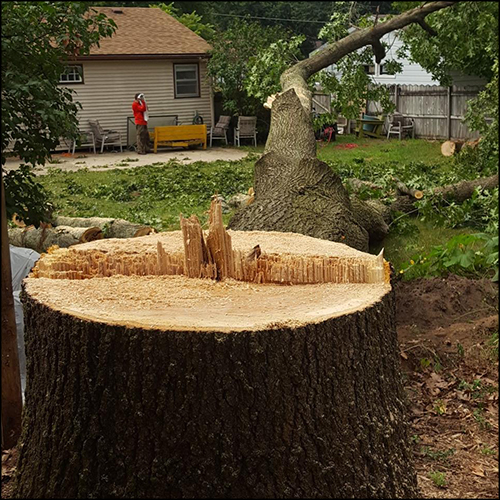 MAT-tree-removal-gallery-13