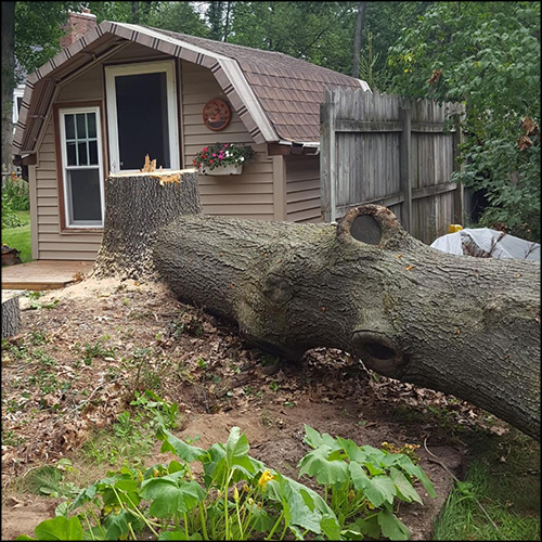 MAT-tree-removal-gallery-14