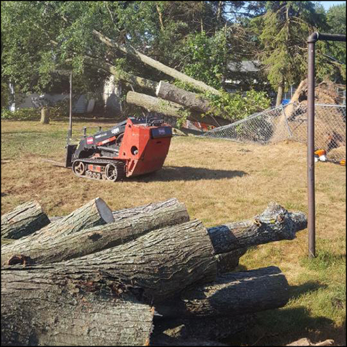 MAT-tree-removal-gallery-18