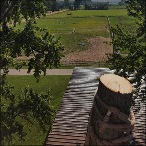 MAT-tree-removal-gallery-19