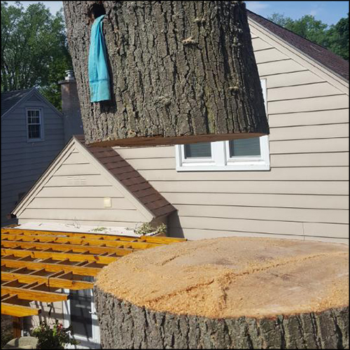 MAT-tree-removal-gallery-2