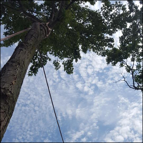 MAT-tree-removal-gallery-23