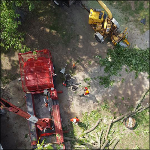 MAT-tree-removal-gallery-27
