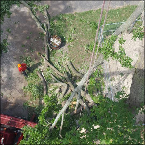 MAT-tree-removal-gallery-28
