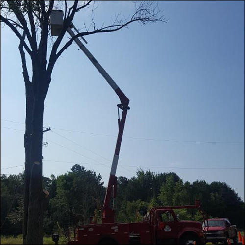 MAT-tree-removal-gallery-31