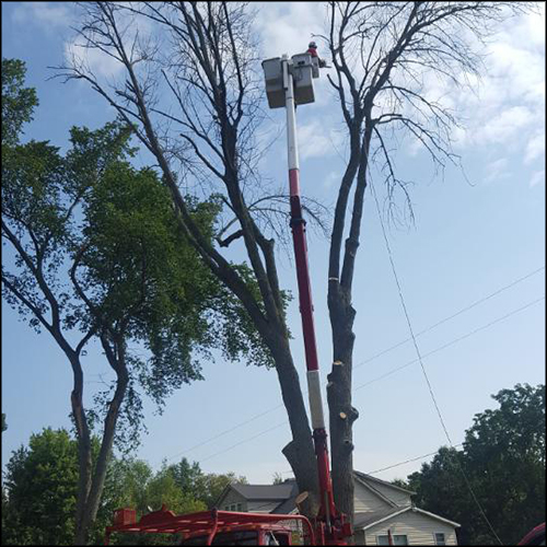 MAT-tree-removal-gallery-32