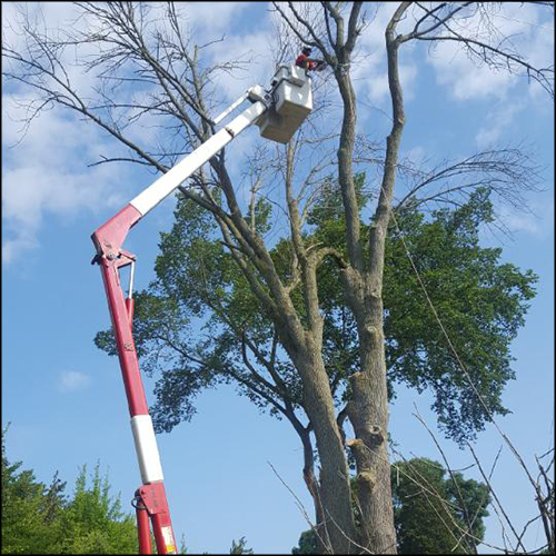 MAT-tree-removal-gallery-33
