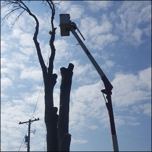MAT-tree-removal-gallery-38