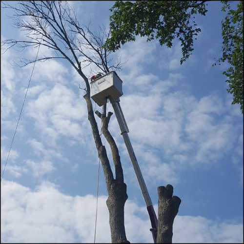 MAT-tree-removal-gallery-39