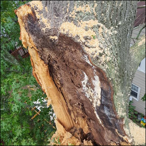 MAT-tree-removal-gallery-4