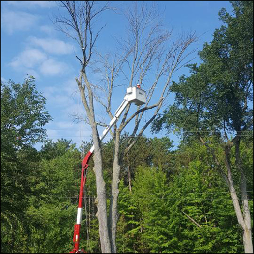 MAT-tree-removal-gallery-40