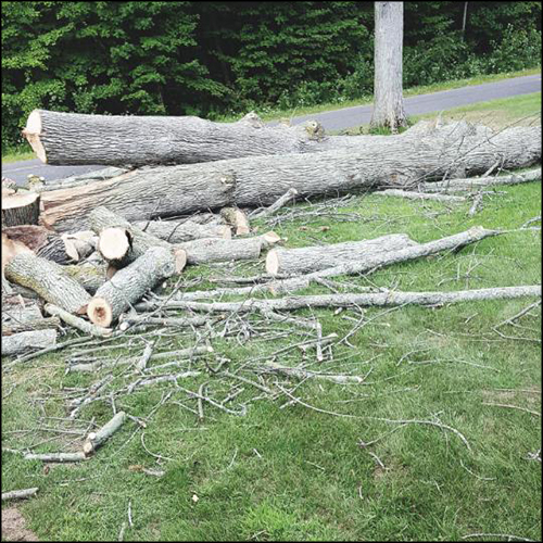 MAT-tree-removal-gallery-41