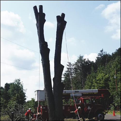 MAT-tree-removal-gallery-42