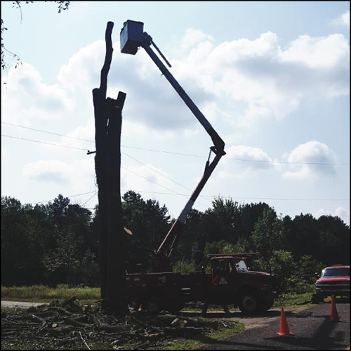 MAT-tree-removal-gallery-44