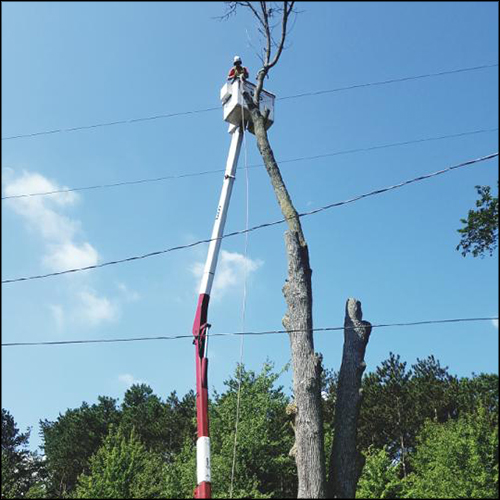 MAT-tree-removal-gallery-45
