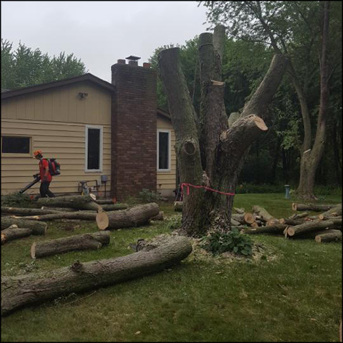 MAT-tree-removal-gallery-5