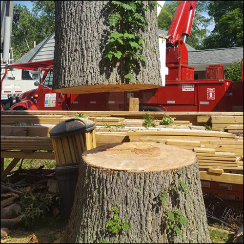 MAT-tree-removal-gallery-7