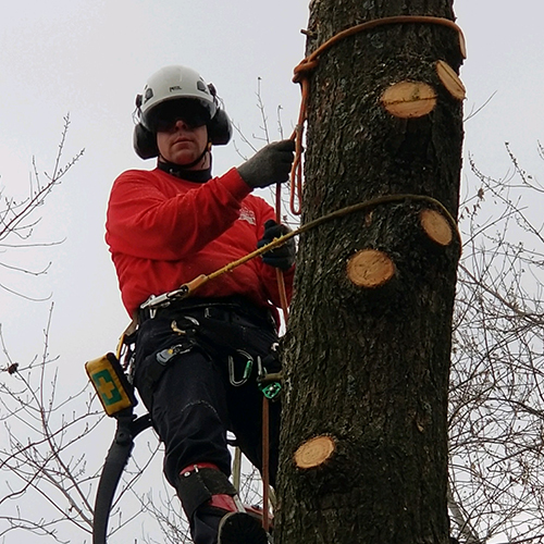 MAT-tree-removal-gallery-51
