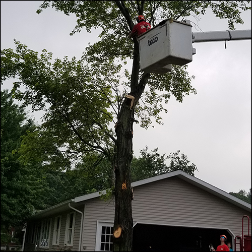 M&A-tree-removal-65
