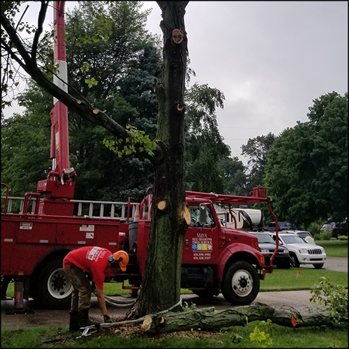M&A-tree-removal-66
