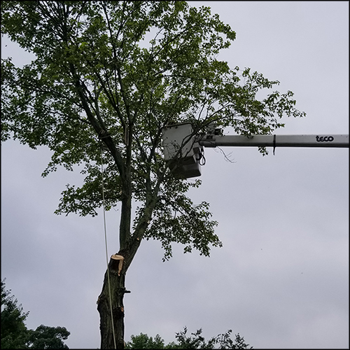 M&A-tree-removal-67