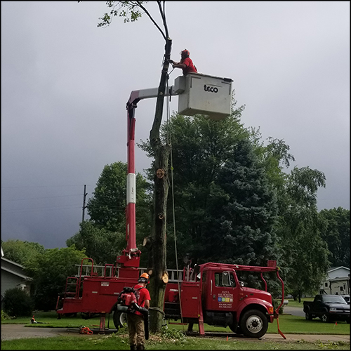 M&A-tree-removal-68